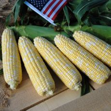 HYBRID SWEET CORN, AMERICAN DREAM IFSI RESERVE
