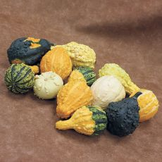 GOURD, FANCY WARTED MIX
