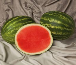 HYBRID WATERMELON, SWEET POLLY