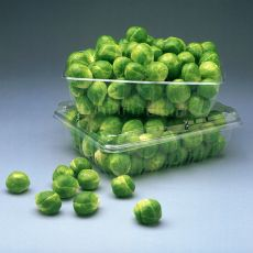 HYBRID BRUSSELS SPROUTS, CAPITOLA