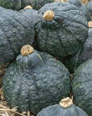 SQUASH, CHICAGO WARTED