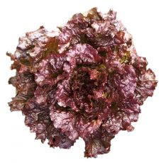 LETTUCE, RED EXPRESS