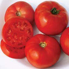 HYBRID TOMATO, SCARLET RED