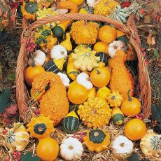 GOURD, SMALL GOURDS MIXED